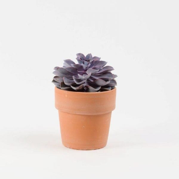 Purple Succulent From Your Flower Story London - Send Flowers in Barnet and North London (1)